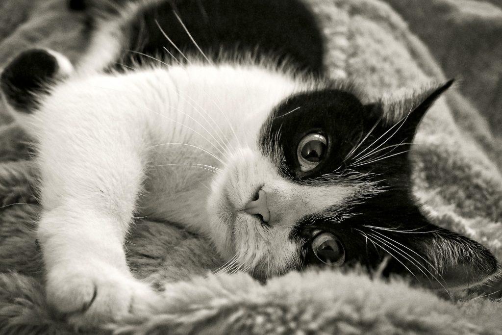 efecto relajante de las mascotas
