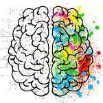 hemisferios del cerebro